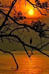 Peponi I (Paradise) (Anna Kwa) Tags: sunset beach silhouette paradise crane johor maur thegalaxy westmalaysia muarriver colorphotoaward mygearandme