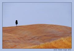 Tuscany - 11 (cienne45) Tags: italy landscape cienne45 carlonatale tuscany toscana valdorcia natale cypresses paesaggio cipressi sanquirico abigfave spiritofphotography
