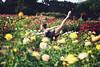 Ballerina (Danielle Pearce) Tags: red roses ballet girl yellow canon garden ballerina pretty mark ii 5d arabesque