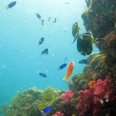 IMG_4220 (d3_plus) Tags: snorkeling freediving izu g12    togai hirizo    nakagi canonpowershotg12  is04