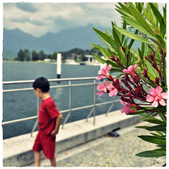 Un Bacio .... e Oleandri sul Lago di Como