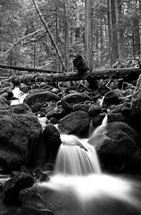 A new year and still a friendly place...... (McCoy352) Tags: longexposure blackandwhite satisfaction olympicnationalpark oldgrowth slowwater fallentimber lotsofmoss someplacesjustsortoftugatyourheart
