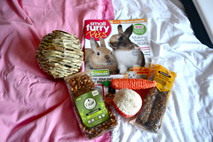 Mylo is quite possibly the most spoilt bunny I know! (mylo_rabbit) Tags: pet baby cute rabbit bunny love animal mouth naughty monkey ginger yummy furry play adorable handsome fluffy cheeky whiskers presents precious ear playtime mylo houserabbit lop spoilt minilop nomnomnom