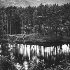 Pine Reflections (ChrisDale) Tags: bank beauty blackandwhite britain chrismdalechrisdale clear clearwater cloud cumbria cumbrialandscape district england forest grassyhill grey hills hows lake lakedistrict lakedistrictlandscape lakedistrictnationalpark lakeshore landscape mono nationalpark nationaltrust naturalbeauty nature pine pineforest reflections shoreline sky still stillwater tarn tarnhows trees uk walk water