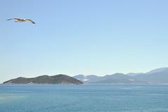 DSC_0981 (marcobasic) Tags: thassos greece grecia sea mare lungomare panorama seaside seagul gabbiano
