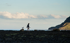 Walking Seagul (Noi Dennis-Photography) Tags: robyn hood bay