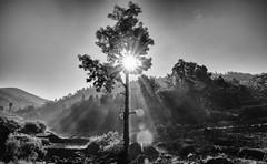 Tree (Padmanabhan Rangarajan) Tags: araku valley india rural scenes tribals villagers vishakapatnam vizag