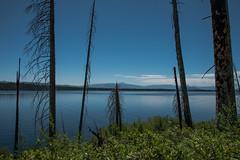 Lake View - Jenny Lake - Grand Teton National Park - Wyoming - 20 June 2016 (goatlockerguns) Tags: mountains grandtetonnationalpark wyoming waterfall river stream mountain nationalpark park usa unitedstatesofamerica nature natural west western lake string jenny trail forest trees
