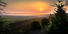 Ground waves (Daan Heijnen) Tags: sunset tree fog fogg outdoor landscape