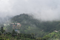 Pothamedu Viewpoint, Munnar (Dinesh flicks) Tags: munnar munnarphotos munnarscenaries munnartouristspot devikulam topstation amaravathidam chinnarwildlifesanctuary thekkady dinesh photography kerala