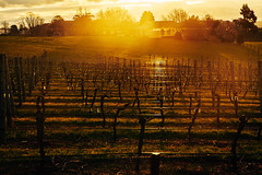 Vineyard, Yarra Valley (gazrad) Tags: agriculture building cloud colour country dawn dusk evening farm grape horizontal kangarooground landscape morning nobody rural sunrise sunset victoria vineyard viticulture wine yarravalley