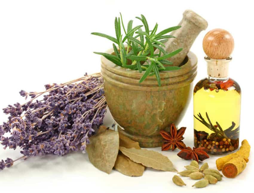 Enterate de quales puedes tratar con estas plantas en vez de invertir tanto en medicinas