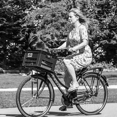 Amsterdam, Vondelpark (Bart van Dijk (...)) Tags: dailylife hondentransport mensenindestad peopleinthecity squareformat cityarchivesamsterdam zw monochroom citylife bw urban straatfotografie stad dagelijksleven dog peopleinthestreets bicycles straatnamenenstadsplekken vrouw monochrome vierkantformaat bicycle blackwhite zwartwit woman 11format stadsarchief fiets city cyclists menseninamsterdam lady bartvandijk animal dame streetphotography cyclist stadsleven dogtransportation fietsen vrouwen dieren hond mensenopstraat stadsarchiefamsterdam peopleinamsterdam dier fietser amsterdam breeblebox