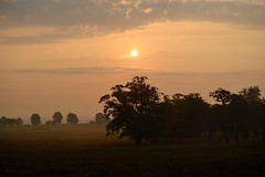 September (marcomes) Tags: d610 nikon september trees morning landscape