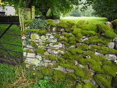 wall (debs-eye) Tags: wharfedale stonewall moss mossy