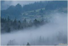 opkomende mist (HP016277) (Hetwie) Tags: frankrijk lahauteloire bomen clouds rain regen mist trees wolken fog france hauteloire