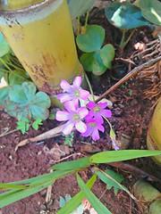 20160910_123816_HDR (Rodrigo Ribeiro) Tags: nature natureza flower flores flor garden gardening jardim jardinagem backyard