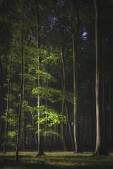 beech forest 2 (Diana Klawitter) Tags: jasmund nationalpark sunrise rgen