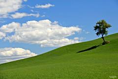 L'albero - The tree - Explore #25 (claudiophoto) Tags: italy colors canon landscape marche paesaggio colline monti torri macerata surreale colorphotoaward paesaggidellemarche claudiophoto marchelandscapemarchecountryside