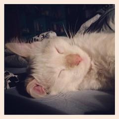 algum tem que conseguir dormir nessa casa (deadoll) Tags: square sierra squareformat catnipaddicts iphoneography instagramapp uploaded:by=instagram