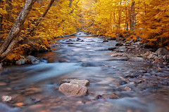 * (whoisnd) Tags: blue trees light red orange usa brown color tree fall water colors beautiful beauty yellow rock stone canon landscape flow gold evening interestingness interesting rocks colorful stream newengland newhampshire beautifullight nh foliage 55mm hues saturation trunk nitin vibrance lateevening thebasin 24105l 1d4 1div mostinterestingphoto nitindangwal
