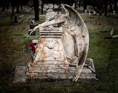 Angel in Mourning (squint photo) Tags: cemetery angel photography mourning nikonn80 fineartphotography angelwings cemeteryphotography sonjaquintero squintphotography angelinmourning