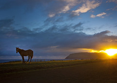 Horse In The Sunset, Easter Island, Chile (Eric Lafforgue) Tags: chile sunset wild horse cloud sun color colour latinamerica southamerica horizontal mammal dawn chili pacific nobody nopeople worldheritagesite pacificocean easterisland colorphoto rapanui isladepascua hangaroa southpacificocean  12638  ili  polynesianisland   ile    southeasternpacificocean polynesiantriangle chileanpolynesia