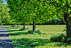 In a Row (IAmRickSee) Tags: park trees tree nature outside outdoors path row rows pathway thompsonpark cs6 iamricksee homebarproductions