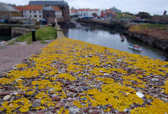 Lichens on harbour wall (--- Green Light Images ---) Tags: scotland lichen dunbar eastlothian dsc2874