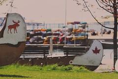 HBM :) (jojo sǝɹnʇdɐɔ) Tags: light summer toronto canada beach water grass canon bench kayak harbourfront umbrellas tones