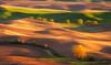 Saffron Sunrise (Gary J Weathers) Tags: sunrise golden washington hills palouse nikond800 ☆thepowerofnow☆ garyjweathers