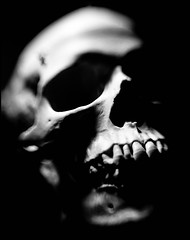 light & shadow (TheOtherPerspective78) Tags: life light shadow white black lensbaby death skull still teeth bones grin bone mori memento totenkopf vanitas kopf schdel lensbabycomposer sweet35 theotherperspective78