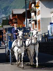 A Taxi in Zermatt (Franzli) Tags: horses zermatt canoneos5dmarkiii canonef100mmf28lisusmmacro