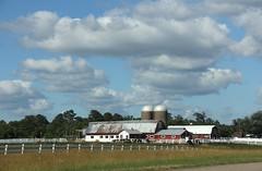 Got Milk? (janetfo747 ~ Pray for Peace) Tags: blue house hot fence cow milk day cloudy farm silo virigina dariy