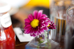 Daisy (daniellih) Tags: seattle pink summer plant flower glass canon table restaurant ketchup magenta july free diner daisy capitolhill tabletop 2012 oddfellows lensing canonbody nikonlens freelensing daniellih