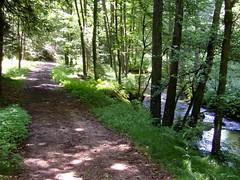 Im Bayerischer Wald nahe Thurmansbang ... (bayernernst) Tags: bayern deutschland juli 2008 wege waldweg bayerischerwald bavarianforest biotop thurmansbang flickrblick umavabayerischerwald 10072008 gingharting snc10168