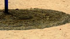 A Shadow Cast (Khaled M. K. HEGAZY) Tags: nikon coolpix p520 rassedr egypt nature outdoor closeup blue brown black beach parasol sand shadow