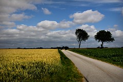A road I know (kimblomqvist) Tags: landscape landscapes nature natura road roads country countryside countryroad field fields sky cloud clouds paisaje vista tree trees arboles arbol nubes cielo yellow blue green azul amarillo verde vert jaune bleau colorful