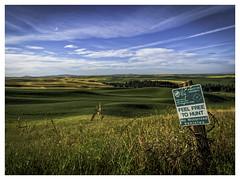 Feel Free to Hunt (keith_shuley) Tags: palouse easternwashington washington colors colorful yelllow green blue olympusomdem1