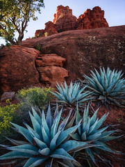 Pointed Patch (Brian Truono Photography) Tags: arizona bellrock hdr highdynamicrange sedona agave arid desert dry exposureblending flowers geology landscape natural nature plant pointy redrocks rock rocks sharp sky spikes stone tree