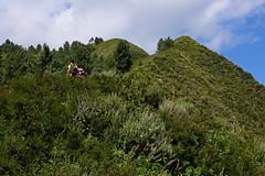 Miranjani: Hills on the ridge (Shahid Durrani) Tags: miranjani nathiagali hike