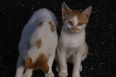 SDIM9447 (@1008988) Tags: sigma foveon merrill sd1m apo50150mmf28exdcoshsm cat straycat