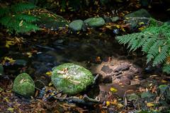 LaGomera2016 (yeray.ventura) Tags: bosque cedro paisaje naturaleza agua rio riachuelo corriente hdr