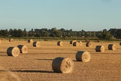 Harvest Time (Henry Hemming) Tags: harvest bales hay symmertry country farm england rye sussex field arable land golden textures shapes
