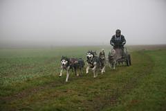 Hundeschlizzenrennen