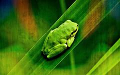 La ranita de la suerte (Montse;-)) ON-OFF) Tags: rana textura frog