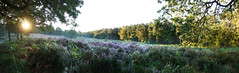 Sunrise near Cologne (na_photographs) Tags: heath heathland heide wahnerheide nature sonnenaufgang heiter sonnig sunny positive balance