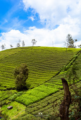 Avalanchi, Ooty (Surendhar Mudaliar Photography) Tags: nilgiris ooty westernghats landscape flowers mountains nature lake roads rain deer forest hills sky tea plants avalanchi coorg mudhumalai tiger reserve travel tamilnadu surendharmudaliar