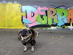 Pug life (duncan) Tags: graffiti latimerroad pug dog