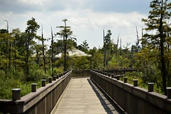 Looking back (holdit.) Tags: tx texas visitorcenter swamp nature natural